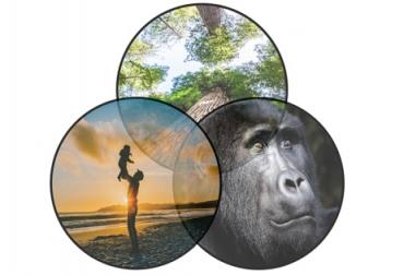 ganadería, ganadería colombia, noticias ganaderas, noticias ganaderas colombia, contexto ganadero, coronavirus, covid-19, enfermedades zoonoticas, enfermedades de los animales, virus de los animales, manejo enfermedades, SARS-CoV-2,