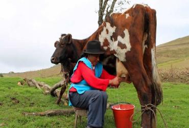 ganadería, ganadería colombia, noticias ganaderas, noticias ganaderas colombia, contexto ganadero, covid-19, campesinos covid-19, campesinos héroes covid-19, coronavirus, pandemia coronavirus, abastecimiento alimentos covid-19, seguridad alimentaria colombia, campesinos, campesinos colombianos,