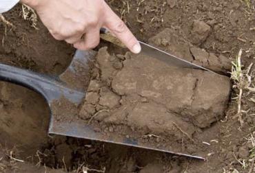 suelos, Agrosavia, erosión, biotecnología, propuestas tecnológicas, cooperación internacional, bacterias, crecimiento vegetal, Ganadería, ganadería colombia, noticias ganaderas colombia, CONtexto ganadero