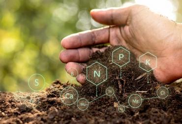 ganadería, ganadería colombia, noticias ganaderas, noticias ganaderas colombia, contexto ganadero, materia orgánica, suelo, composición materia orgánica, calidad de suelo, captura de carbono, gaceta unam, protección del suelo,