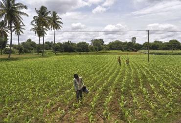 Ganadería, ganadería colombia, noticias ganaderas, noticias ganaderas colombia, CONtexto ganadero, fertilización, fertilizantes, fertirayo, como fertilizar, cantidad de fertilizante necesario para el agro, fertilizantes, uso de fertilizantes, fertilización,