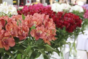 ganadería, ganadería colombia, noticias ganaderas, noticias ganaderas colombia, contexto ganadero, asocolflores, premiacion de asocolflores, asocolflores concurso de variedades, flores que están en tendencia, tendencias de flores en mercados mundiales