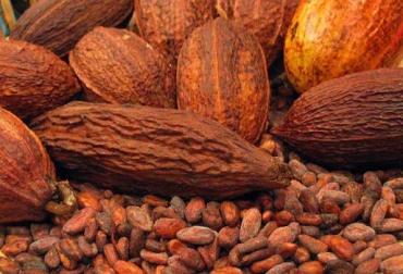 Producción de cacao - Colombia