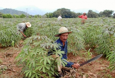 Campesinos colombianos.