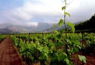 Estrategias para enfrentar el impacto climatológico en la agricultura.