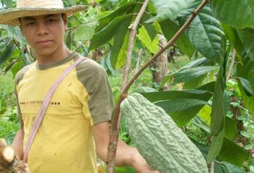 Cultivo cacao