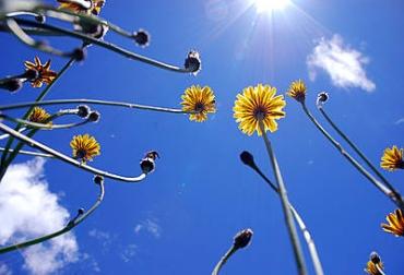 Fotosíntesis y energías renovables