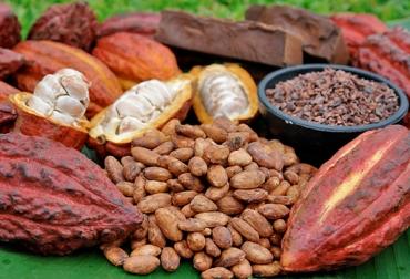 nuevas variedades de cacao