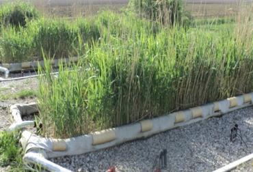 Humedales construidos o artificiales son el reto ambiental