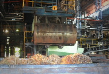 planta aceite palma biocombustibles