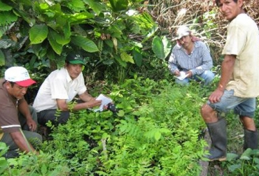 Agricultura colombiana