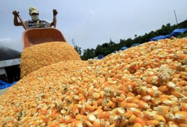 preservación de granos