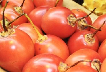 Frutoterapia para adelgazar tomate de arbol fotos