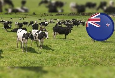 10 cualidades del productor de Nueva Zelanda, equipo de trabajo, fertilidad del suelo se controla de cerca, suplementación basada en precio, superficie con cultivos anuales, CONtexto ganadero, noticias de ganadería colombiana.