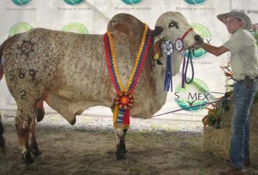 Asociación Regional de Ganaderos de Puerto Boyacá Expobrahman