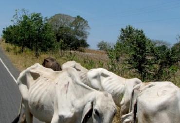 Sequía en Cesar