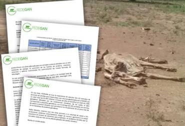 verano Colombia animales muertos