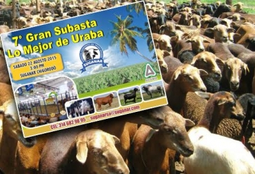 ovinos en Colombia