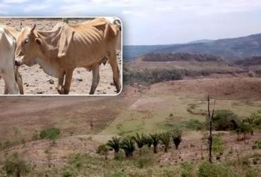 muerte de reses en Colombia