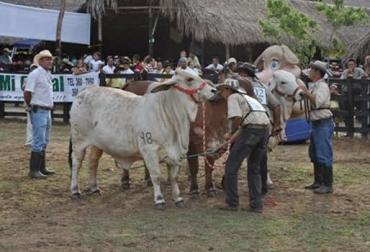 Feria San Vicente del Caguán