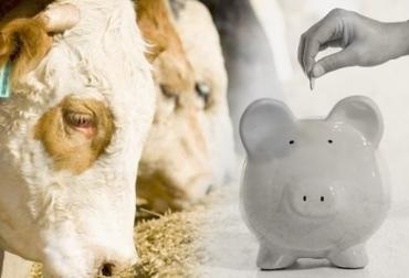 Cundinamarca, Zipaquirá, suplementación animal, maíz, reducción de costos, Comité de Ganaderos de Zipaquirá, Fedegán, Contexto ganadero
