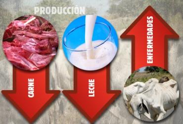 Caldas, afectaciones por el verano, afectaciones Fenómeno de El Niño, baja producción de carne, baja producción de leche, enfermedades, .contexto ganadero