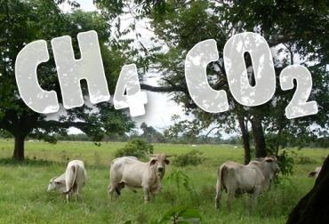 Ganadería, Ganadería Sostenible, ganadería sostenible Colombia, huella de carbono, gases de efecto invernadero, gases contaminantes de la ganadería, beneficios de los sistemas silvopastoriles, de los Sistemas Silvopastoriles Intensivos, proyecto Ganadería Colombia Sostenible beneficios, coordinador del Proyecto Ganadería Colombiana Sostenible, Cipav, beneficios de la ganadería, efectos positivos en el medio ambiente, CONtexto ganadero