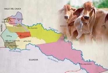 Contrabando, ilegal, reses, ganado, ganadero, Putumayo, Colombia, Ecuador