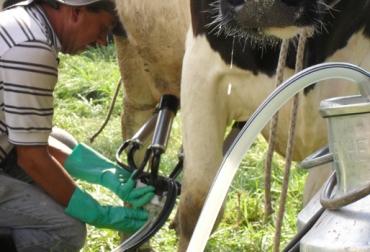 Verano, disminución, producción láctea, ganaderos, ganaderías, falta comida, pastos, suplementos, trashumancia, Cesar