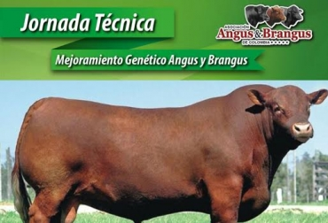 genética angus Colombia