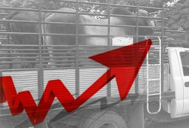 abigeato en las sabanas araucanas, abigeato en Arauca, ganaderos piden apoyo de autoridades para frenar el abigeato,