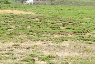 Ganaderos de Vichada sufren por la acidez de sus suelos, Ganaderos de Vichada solicitan ayuda del Estado, Ganaderos de Vichada quieren poner a producir sus tierras