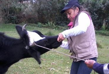 Mujer ganadera del Putumayo, ganaderas de Putumayo se destacan por su labor en el sector, mujeres y hombres trabajar en igual de condiciones en el sector ganadero de Putumayo