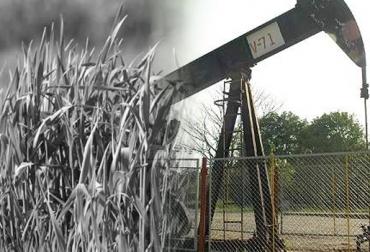 Efecto negativo de la industria petrolera en pastos y ganado, el petroleo perjudica y contamina las ganaderías de Antioquia y Santander