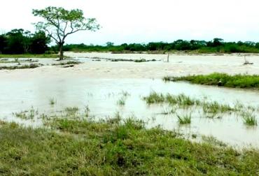desbordamiento del río Ariari en Meta afecta a ganaderías de la región, inundación de predio en la región de Ariari, arrastramiento de cultivos y animales en la región del Ariari