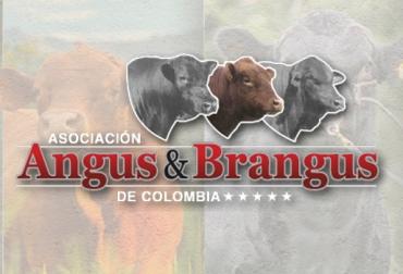 Asoangusbrangus, fomento de razas Angus y Brangus, feria ganadero, evento familiar, asociados, productores de Angus y Brangus, Oriente antioqueño, sector ganadero, Rionegro, CONtexto ganadero