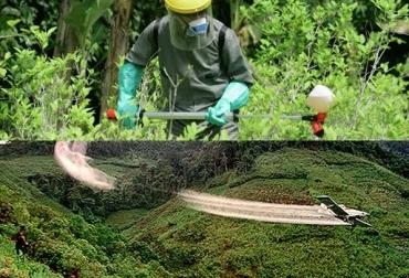 erradicación de cultivos glifosato colombia