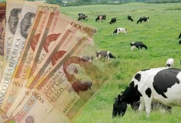 educación financiera en el sector ganadero