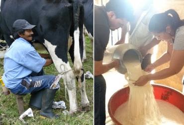 comercialización de leche en Guaviare, producción de leche en Guaviare, pequeños productores de leche, comercialización informal de leche en Guaviare, formalización de lecheros y queseros, Contexto Ganadero,
