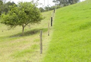 leyes de Voisin ganadería, leyes de Voisin ganadería colombia