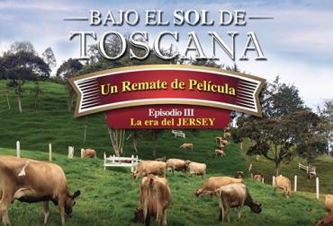 hembras puras Jersey, remate de ganado, ganado de leche, Asojersey, ganaderos de Antioquia, Rionegro, CONtexto ganadero