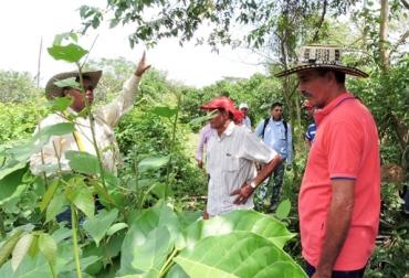 avances del programa Ganadería Colombiana Sostenible, ganaderos beneficiados, foros regiones de ganadería sostenible, Sistemas silvopastoriles, GEF, cercas vivas, fedegan, CONtexto ganadero