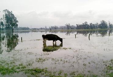 lluvias en el Valle de Ubaté, lluvias atípicas Valle de Ubaté, inundaciones en el Valle de Ubaté, fincas ganaderas del Valle de Ubaté inundadas, ganaderos Valle de Ubaté, laguna de Fúquene, CONtexto ganadero