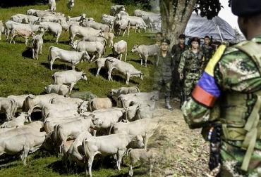 Robo 1000 cabezas de ganado Caquetá Farc abril 2017, Robo ganado disidentes Farc, farc, farc caquetá, farc en caquetá, presencia de las farc en caquetá, intimidación guerrilleros de las farc, CONtexto ganadero, ganadería Colombia