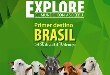 gira de Asocebú a Bracil, explora con Asocebú, razcebuinas en Colombia, ganaderos de Colombia irán a Brasil, ganado cebú en Colombia, CONtexto ganadero