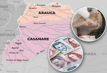 aftosa, brote de aftosa, brote de aftosa en arauca, fiebre aftosa en arauca, tame arauca, Ganaderos de Arauca, ganadería arauca, ganadería casanare, ica colombia, ICA, CONtexto ganadero, ganadería colombia