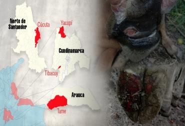 Focos fiebre aftosa Colombia junio y julio 2017, fiebre aftosa en Colombia, brotes fiebre aftosa Colombia, José Félix Lafaurie presidente de Fedegan, Ministerio de Agricultura, aftosa, brote de aftosa, brote de aftosa en cundinamarca, yacopí cundinamarca, fiebre aftosa en cundinamarca, ICA, ica colombia, CONtexto ganadero, ganadería colombia
