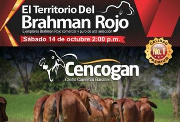 territorio brahman rojo, Cencogan, III Territorio Brahman Rojo, subastas ganaderas, subastas ganaderas en colombia, subastas ganaderas en caucasia, subastas en córdoba, contexto ganadero, ganadería colombia