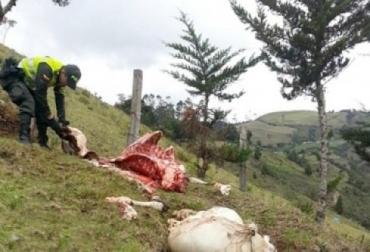 Abigeato, robo de ganado, departamento del Huila, municipio de Santana, carneo, Palermo, campoalegre, ejército, Policía Nacional, acciones de prevención, CONtexto Ganadero, noticias de ganadería colombiana.