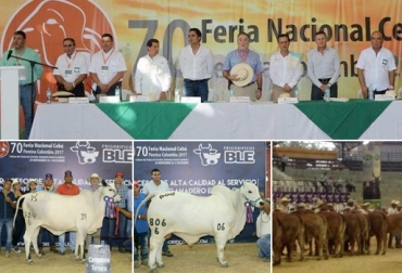 Asocebú, 70 Feria Nacional Cebú, Feria Nacional Cebú, Pereira Feria Asocebú, feria nacional cebú pereira, Asocebú colombia, pereira ganadería, ganadería colombia, Asociación Angus Brangus Colombia, Brangus, CONtexto ganadero, noticias ganaderas colombia